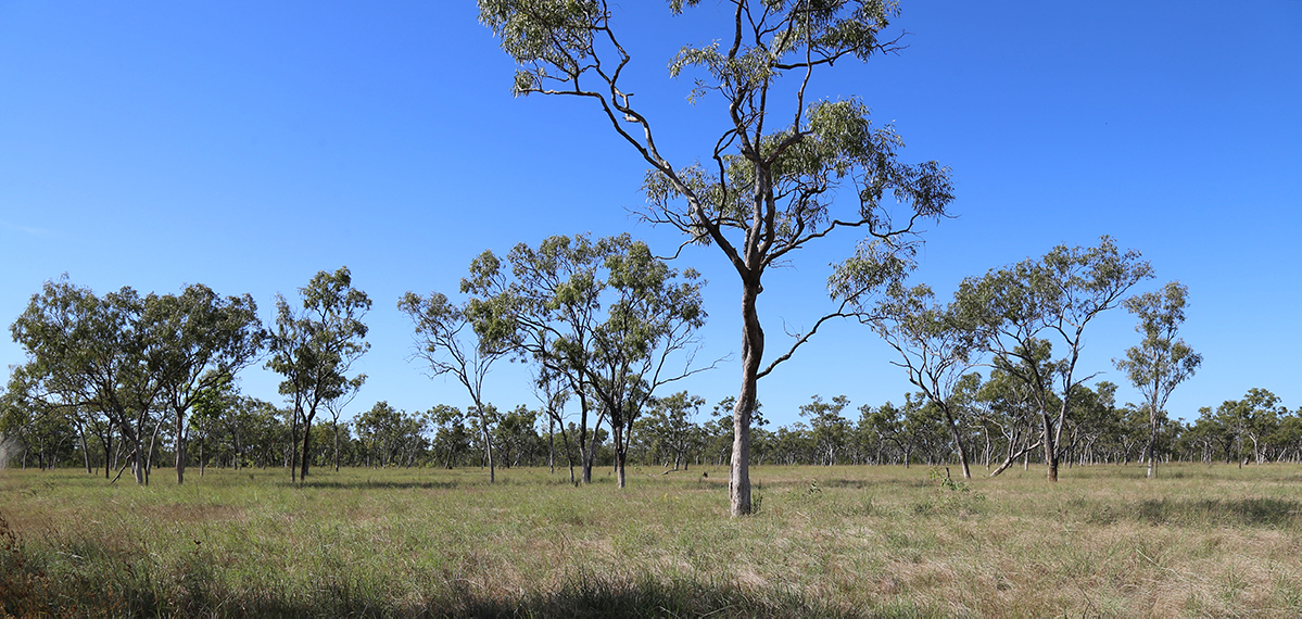Mitchell River catchment grasslands