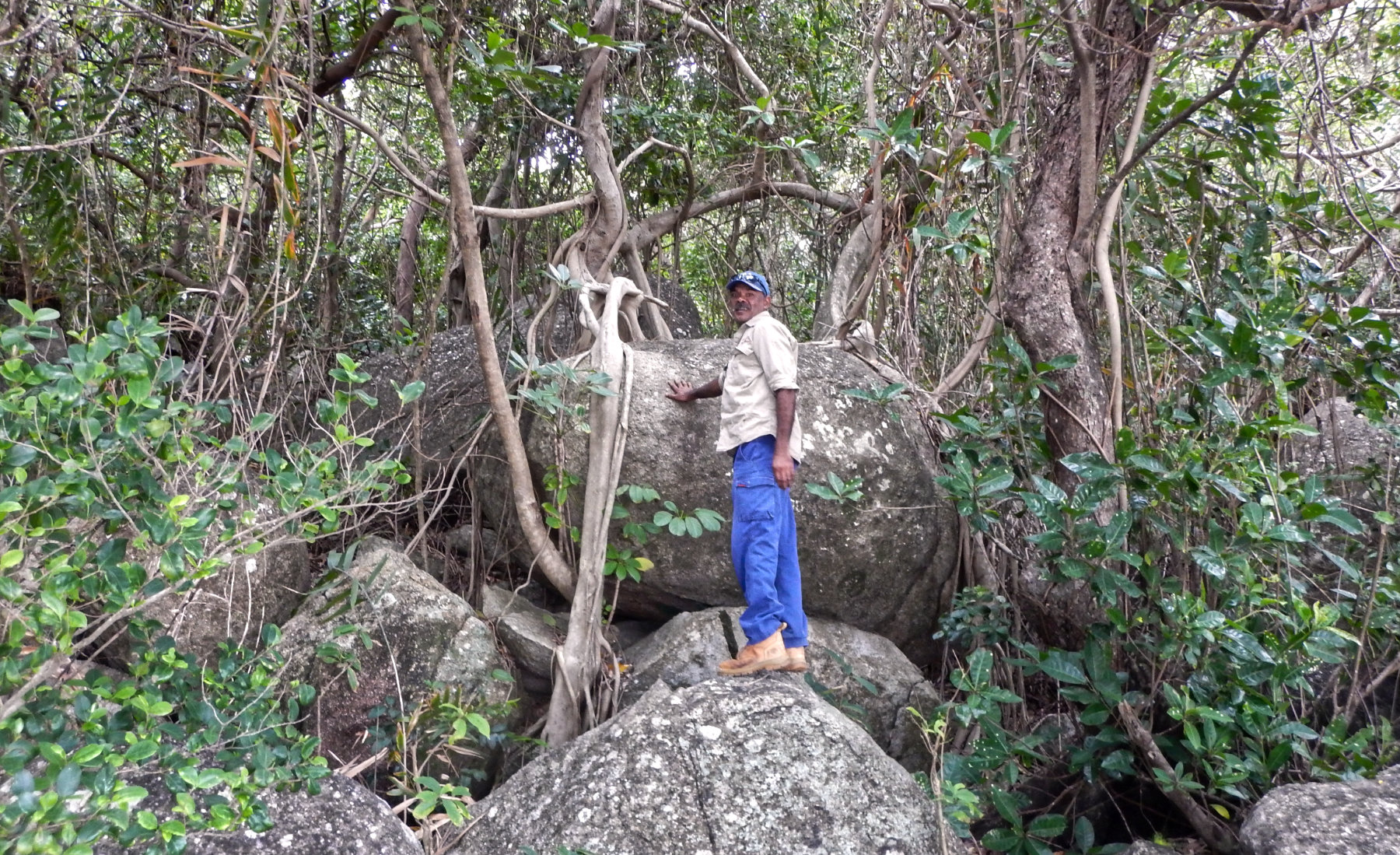 Traditional Owner Craig Gibson investigating Littoral Rainforest at Quarantine Bay near Cooktown