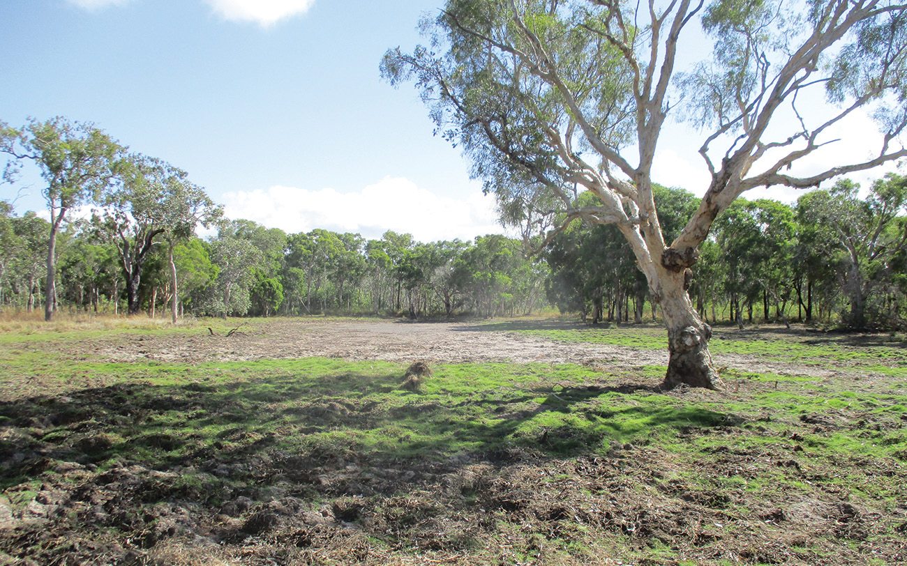 INSET ABOVE | CURLY LAGOON WAS BEING BADLY DAMAGED BY FERAL PIGS DIGGING UP THE EDGES PHOTO ABOVE | CURLY LAGOON IS NOW RECOVERING WELL